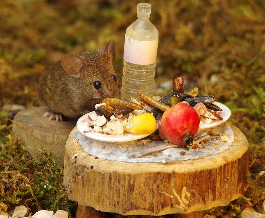 Die Futterstelle der Mausfamilie