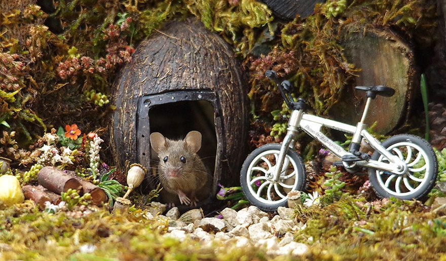Hier kommt die Maus!