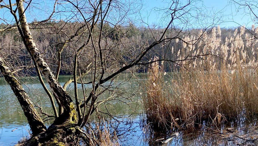 Vorgestellt: die Ville-Seenkette in Erftstadt