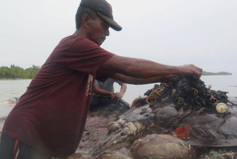Toter Wal an der Küste Indonesiens